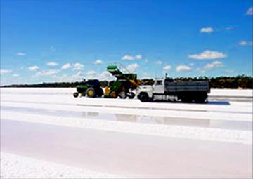 ミネラルハーヴェスト塩 収穫風景